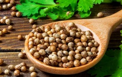 Healthy Benefits Of Coriander Leaves