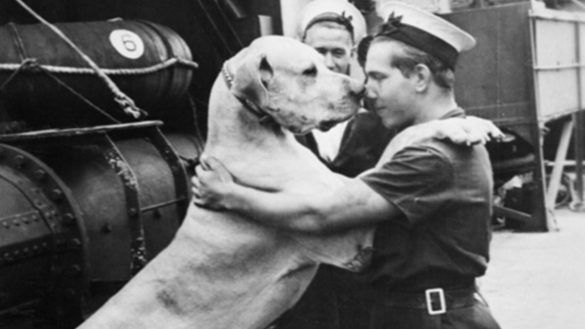 Here Are Top 10 Animal War Heroes
