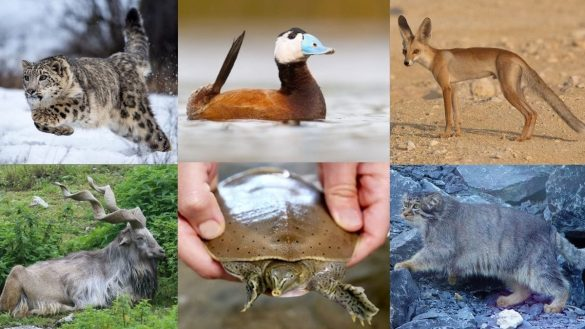13 Exotic pakistan Animals You wouldn't Believe Exist