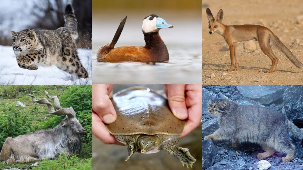 13 Exotic Animals In Pakistan You wouldn't Believe Exist