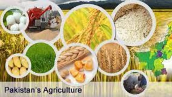 Importance of Agriculture in Pakistan Economy and Development